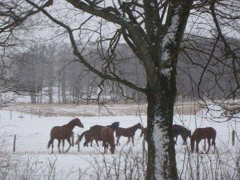 Hästar från punschverandan